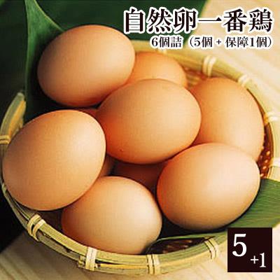 放し飼い自然卵