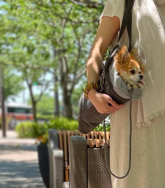 THE BESS お抱えバッグ 犬用グッズ M 流行 新品 スマイヌ