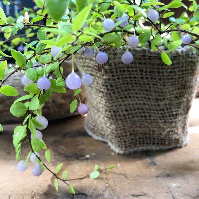 パワーストーン 真珠コケモモ 大人気 激安挑戦中 お値打ち価格で 観葉植物
