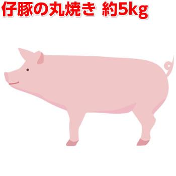 豚の丸焼き5kg 仔豚 子豚 子ぶた BBQ 仔ぶた 送料無料 バーベキュー まる焼き 正規取扱店 丸焼き 業務用 選択