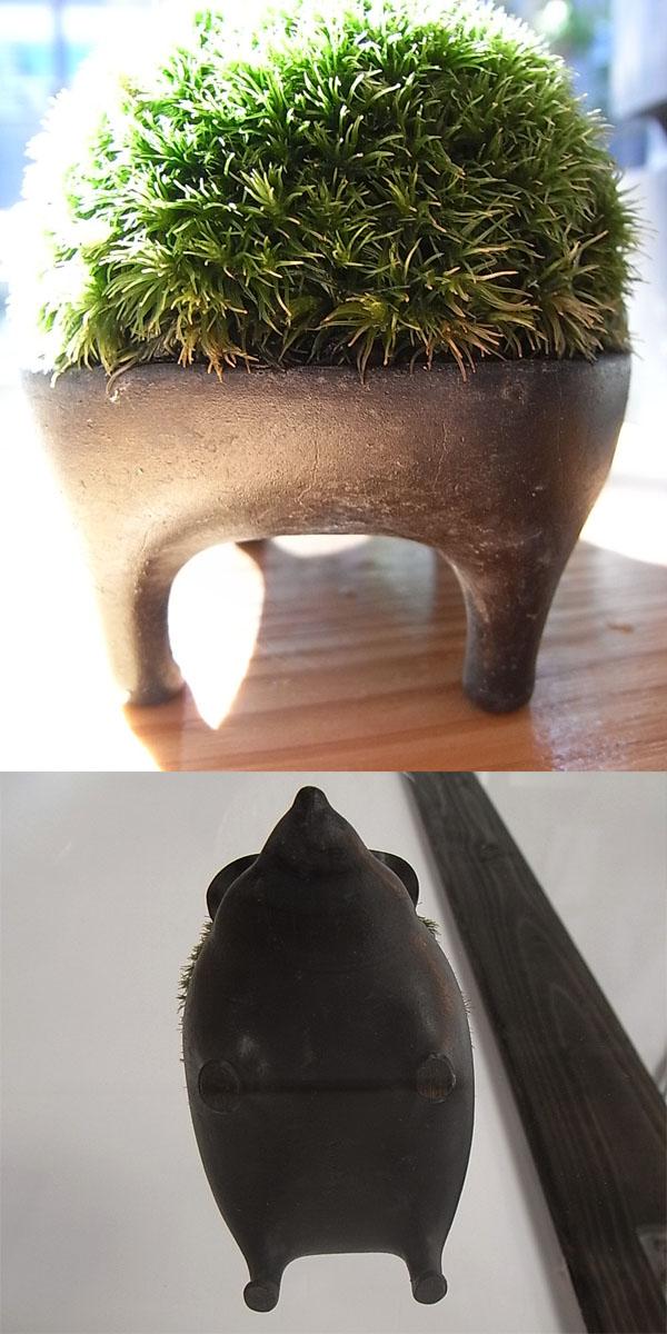 苔藓盆景刺猬青铜 /: leucobryum 尾蜥虎