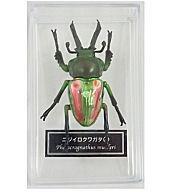 誕生日 お祝い 中古 フィギュア ニジイロクワガタ 雄 同梱フィギュア DATA 世界の昆虫 5☆好評 BOOK