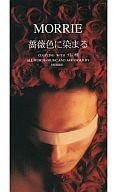 【中古】シングルCD モーリー         /(廃盤)薔薇色に染まる/幻の蝶