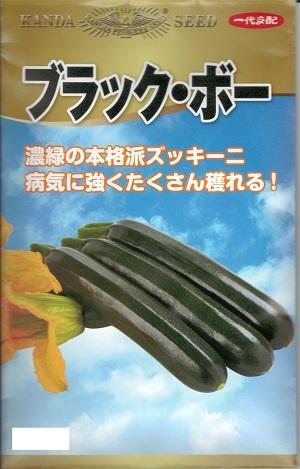 即日出荷 爆買い送料無料 濃緑色の本格派ズッキーニ 生育が早くたくさん獲れる 野菜種子 ズッキーニ種子 神田育種農場 ブラック ボー 送料無料 100粒袋詰