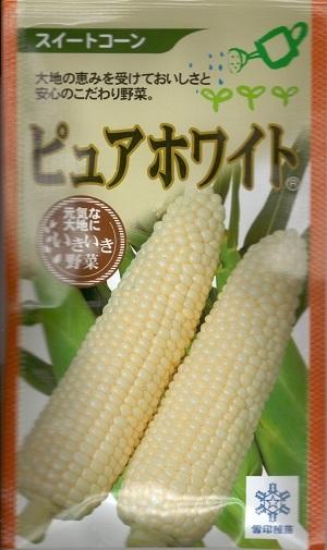 白くておいしいスイートコーン とても甘くてフルーティー 野菜種子 トウモロコシ種 送料無料 30ml袋詰 ピュアホワイト 売却 激安 雪印種苗