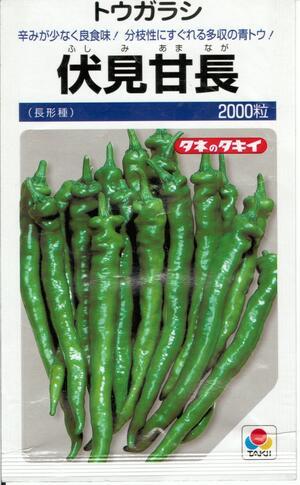 辛味が少なく良食味 分枝性に優れる多収の青トウ 野菜種子 定番の人気シリーズPOINT(ポイント)入荷 とうがらしタネ 2000粒袋詰 送料無料 タキイ種苗 定番 伏見甘長