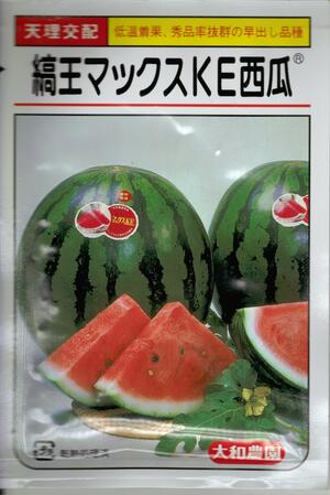 野菜種子 『大玉スイカ』 大和農園 縞王マックスKE 200粒袋詰【 送料無料 】