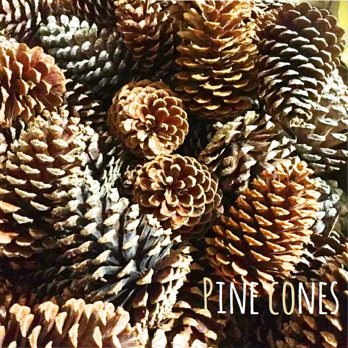 large pine cones and pine cones 1 pinecone store natural material handmade christmas wreath materials parts pine ornament natural products christmas