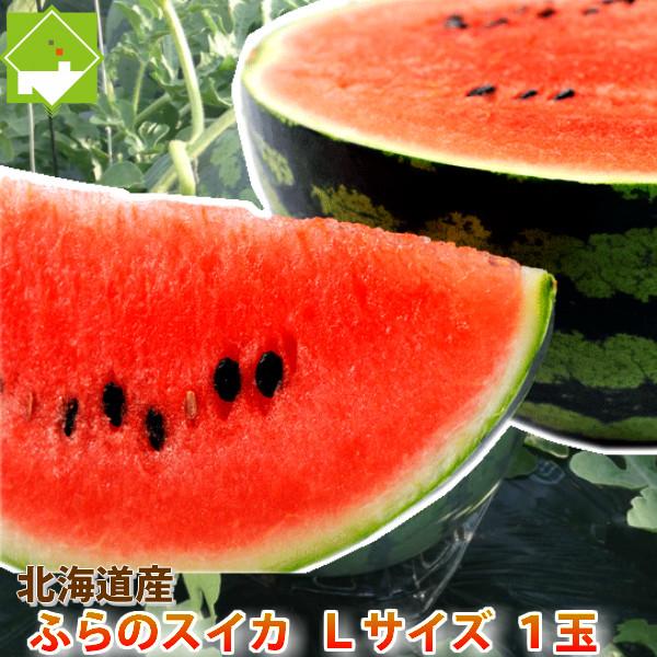 北海道富良野産 有機肥料でとっても甘く育った スイカ  1玉 5kg以上 【送料無料】【あす楽対応_北海道】