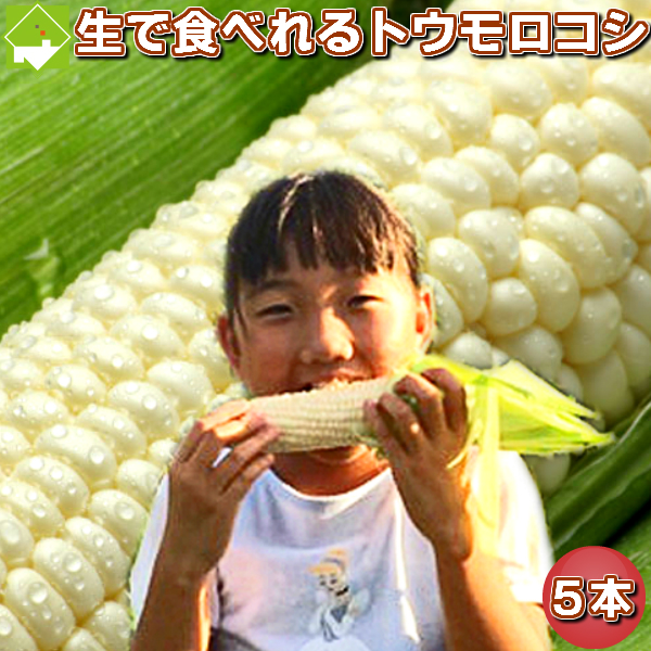 「ご予約販売」北海道富良野産 激甘トウモロコシ ピュアホワイト 5本【送料無料】<BR><BR>【10P03Dec16】
