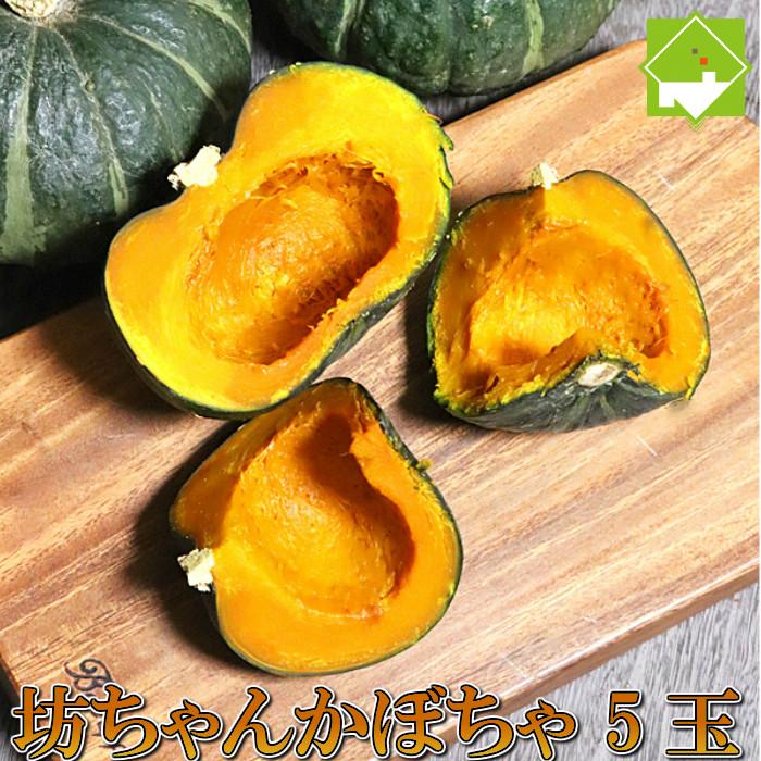有機肥料で栽培したホクホクの坊ちゃん(ボッチャン)かぼちゃ♪ かぼちゃ ハロウィン 北海道富良野産 坊ちゃんかぼちゃ 5玉 送料無料 別途送料が発生する地域あり