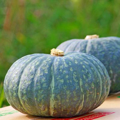 ホックホクで甘く皮まで安心して食べられるカボチャです 北海道富良野産 有機肥料であま~い南瓜 商店 かぼちゃ 1.5kg前後 お歳暮 1玉 栗ゆたか 10P03Dec16