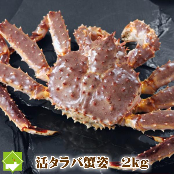 1尾2.0kg以上!かに( カニ蟹 )の王様!浜ゆで・【活】選べます!新鮮だから刺身でも食べれる! たらば蟹 オス 北海道産 特大 2kg(1尾) 送料無料 「ボイル・活 選択可能」