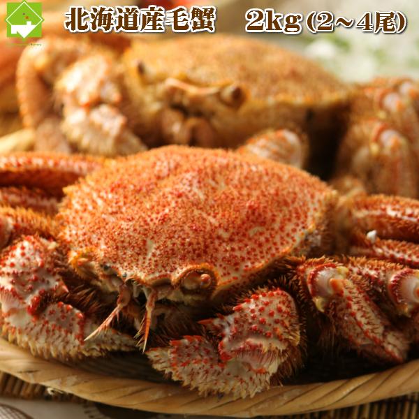 北海道産 最高級 毛蟹 2~4尾入 約2kg詰 送料無料