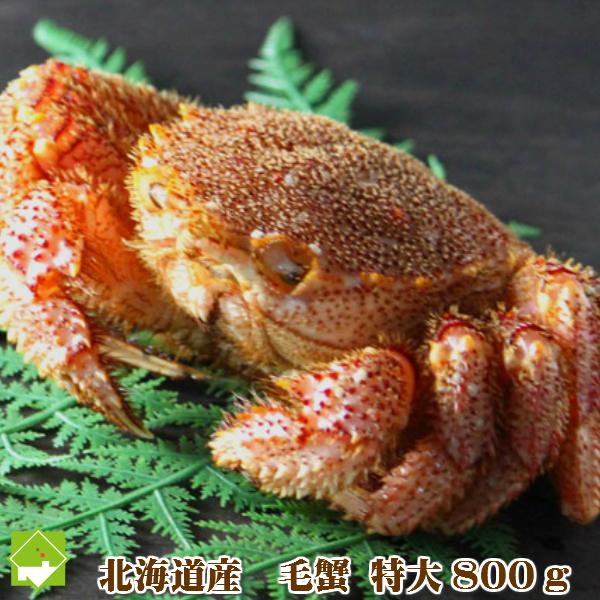 浜茹で冷凍 北海道産 毛蟹 特大800g極上 【堅】【10P03Dec16】