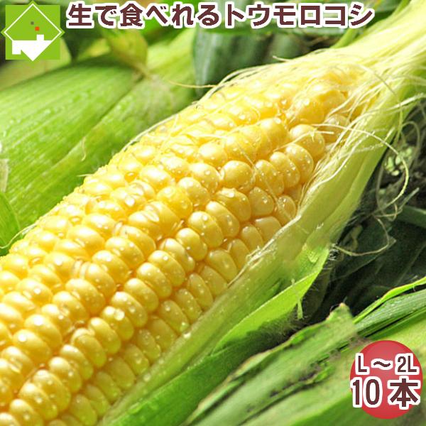 とうもろこし 【生】で食べれるトウモロコシ 北海道富良野産  恵味 Lサイズから2Lサイズ 10本入り 送料無料