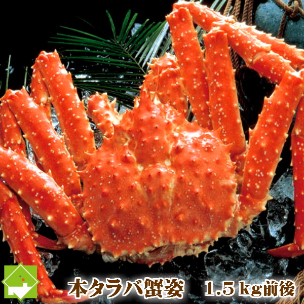 本たらば蟹(タラバガニ)オス 1.5kg前後×1尾 ボイル急速冷凍 スイートベジタブルファクトリー