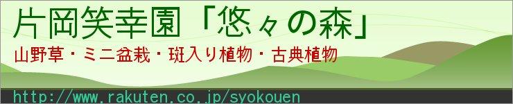 片岡笑幸園「悠々の森」:コツコツと少しずつ小さな盆栽を作っています。