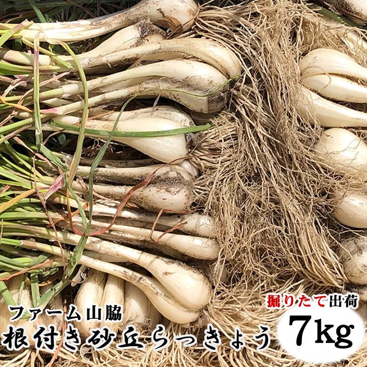 【予約販売】鳥取県北栄町産『ファーム山脇さんの葉付き根付き砂丘らっきょう』 【7kg】(サイズ混じり)砂付き[常温]【5月下旬~6月下旬にご予約順発送予定】鳥取らっきょう ラッキョウ