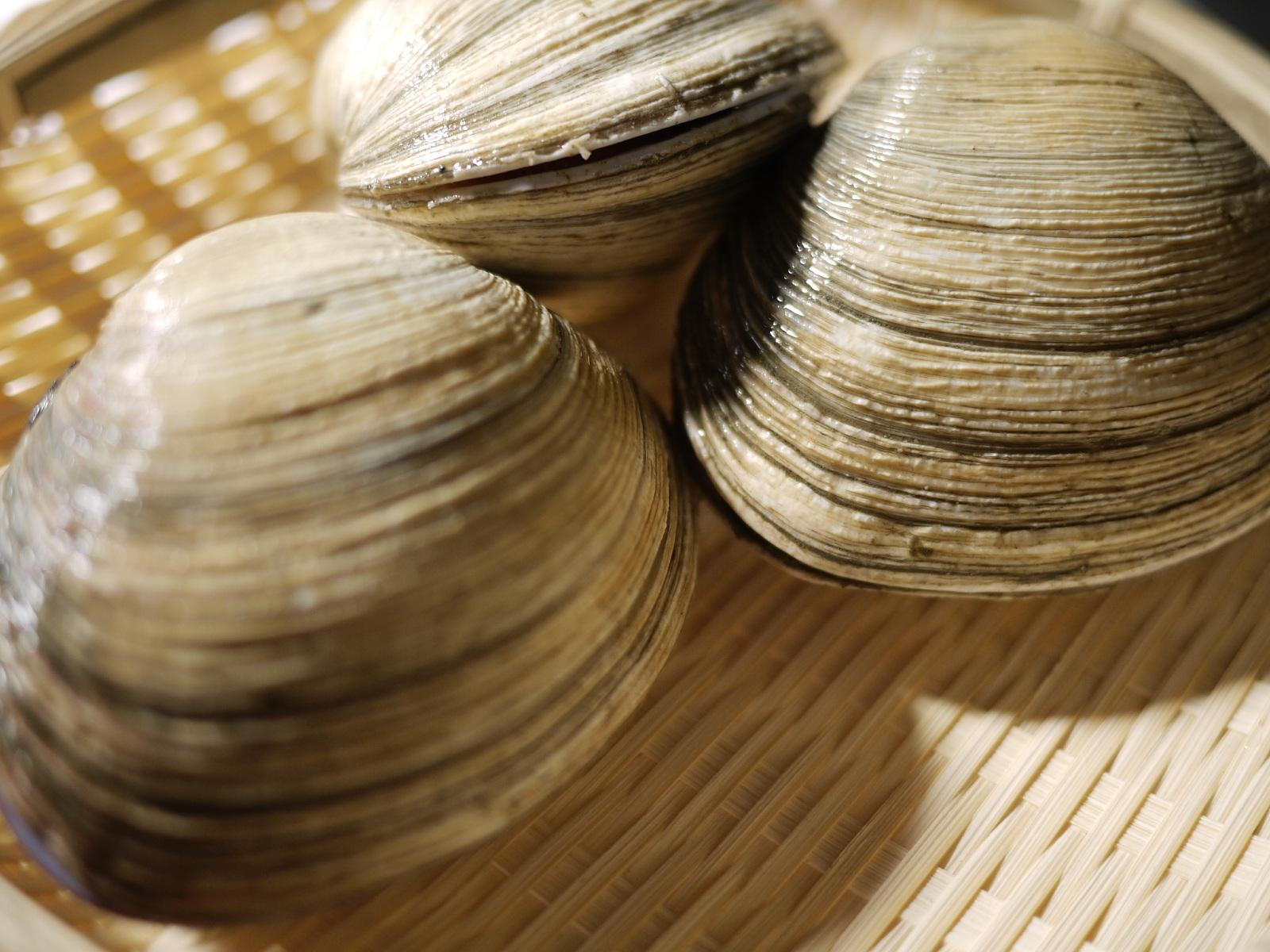 愛知 豊浜で水揚げされた三河湾の新鮮な大アサリを砂抜きをしてお届けします 送料無料 愛知県産 三河湾 活 大アサリ 前後 あさり 大あさり 2kg 値引き 10個 70%OFFアウトレット 大
