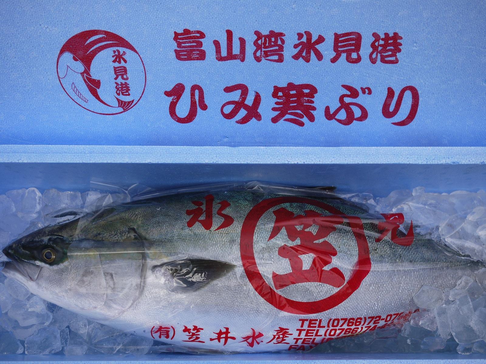 【送料無料】【ひみ寒ぶり宣言】富山湾 天然・氷見の寒ブリ(ひみ寒ぶり) 9kg~10kg