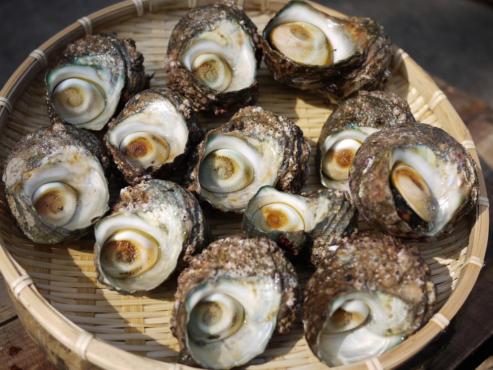 伊勢湾の海の恵み、天然活サザエをお届けします。つぼ焼きにおすすめのサイズです。 【送料無料】愛知県産 天然サザエ 2kg (12個~20個)