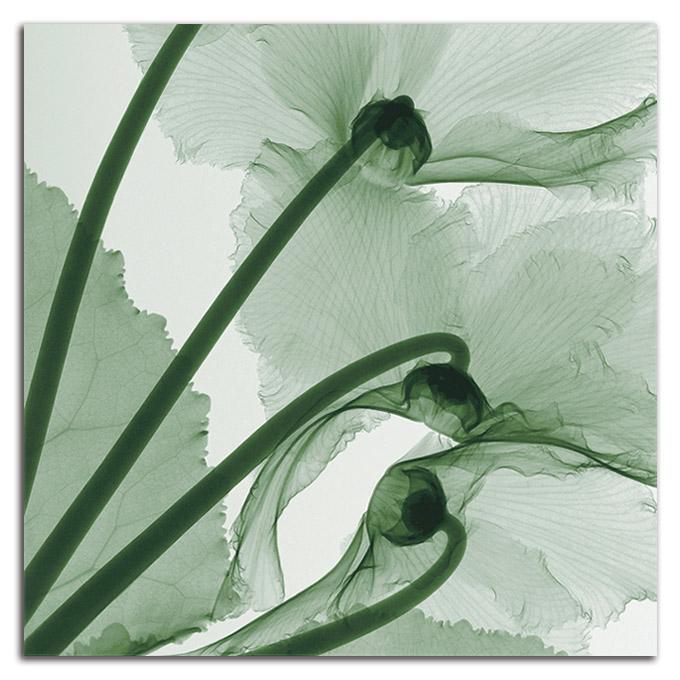 絵画 高級 花 Cyclamen SIZE/mm 870*870おしゃれ 壁掛け 絵 インテリア「究極の繊細美 PLEXIGLASレントゲンアート」
