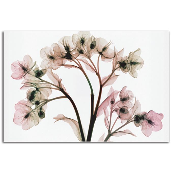 絵画 横長 高級 花 HelleboreII SIZE/mm 1200*740 おしゃれ 壁掛け 絵 インテリア「究極の繊細美 PLEXIGLASレントゲンアート」