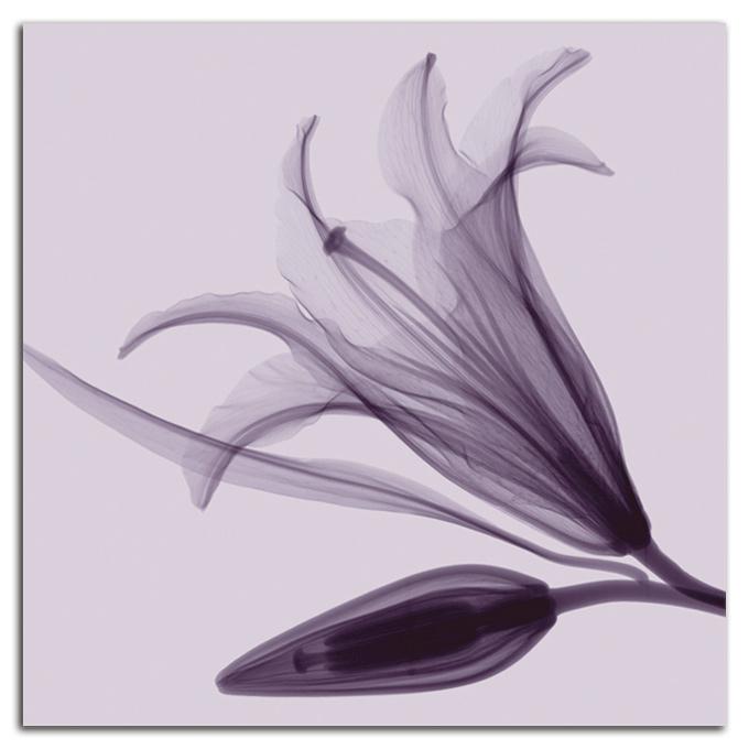 絵画 高級 花 Lily&Bud SIZE/mm 590*590おしゃれ 壁掛け 絵 インテリア「究極の繊細美 PLEXIGLASレントゲンアート」
