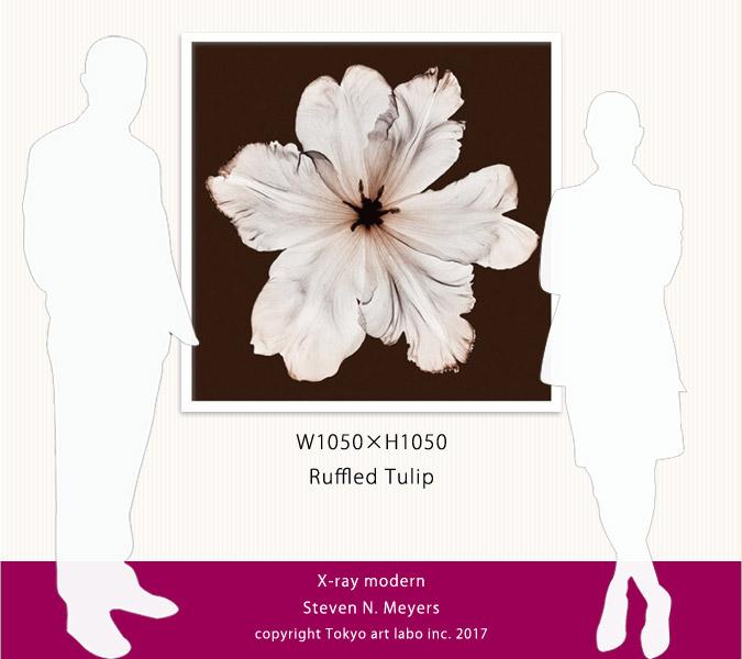 絵画 額入り 完成品 インテリアアート 【白を基調とした部屋 モノトーン調の室内の壁に飾る絵・アート】 Ruffled Tulip「植物の持つ繊細美を、ハーバリウム(植物標本)のような透明感と優しい色彩で表現」額縁カラー選択可