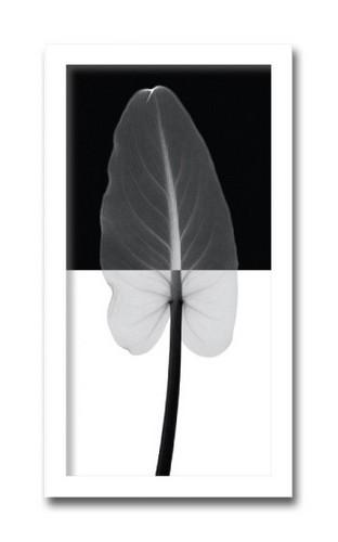 絵画 北欧 Calla Leaf 1(カラ リーフ1) インテリア アート 壁掛け おしゃれ ポスター 額絵 額入り 玄関 アートフレーム