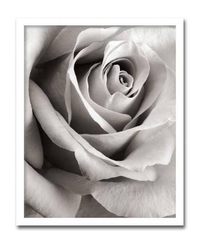 絵画 インテリア 花 植物 S.N.Meyers Rose ローズ壁掛け 絵 おしゃれ アートポスター 額入り 玄関 リビング プレゼント 玄関 飾る ホスピタル パブリック