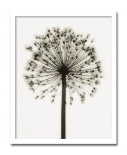 絵画 花 壁アート 北欧 Allium アリウム インテリア 壁掛け 絵 おしゃれ ポスター アートパネル 額入り 玄関 リビング【店頭受取対応商品】