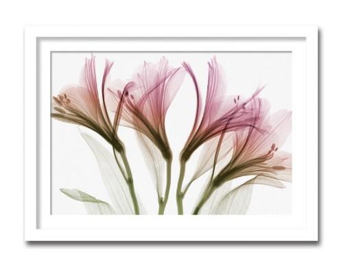 絵画 インテリア 花 植物 alstroemeria アルストロメリアおしゃれ 絵 壁掛け モダン アート ポスター アートフレーム