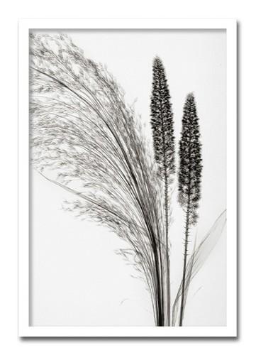 絵画 インテリア 花 大型 アート ポスター Steven N.MeyersBroom Grassおしゃれ 壁掛け 額絵 壁絵 応接室 病院 ホール ロビー