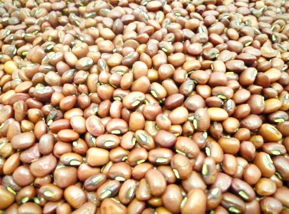【送料無料】豆力特選 岡山県産 備中ささげ 10kg