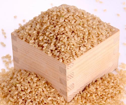 【2020年新米予約】丹波篠山の特別栽培米こしひかり【玄米】25kg 収穫期:9月初旬 北海道・沖縄は別途送料を頂きます。