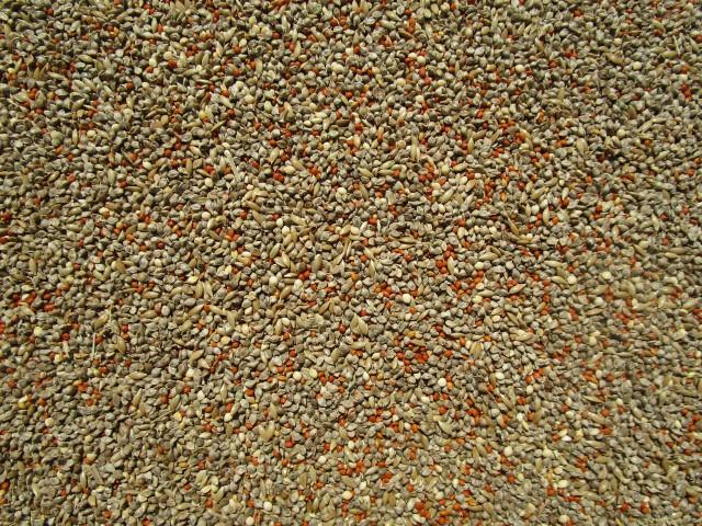 ポストに投函 時間指定不可 オーストヒエ使用 小分け 長期保存 大人気 文鳥 フィンチ ジッパー式袋 中型インコのご飯 1kg※脱酸素剤入り 春の新作続々 小鳥のご飯 皮付き A