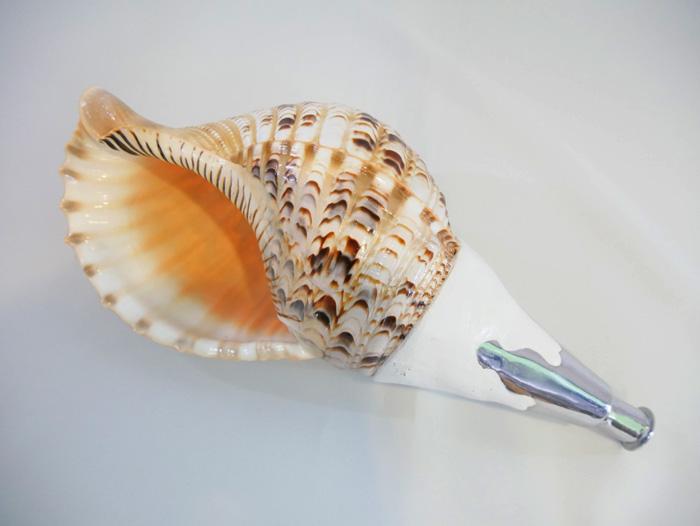 法螺貝・歌口付 サイズ44cm-46cm 真言タイプ 【ほらがい ほら貝 ホラ貝 修験道】