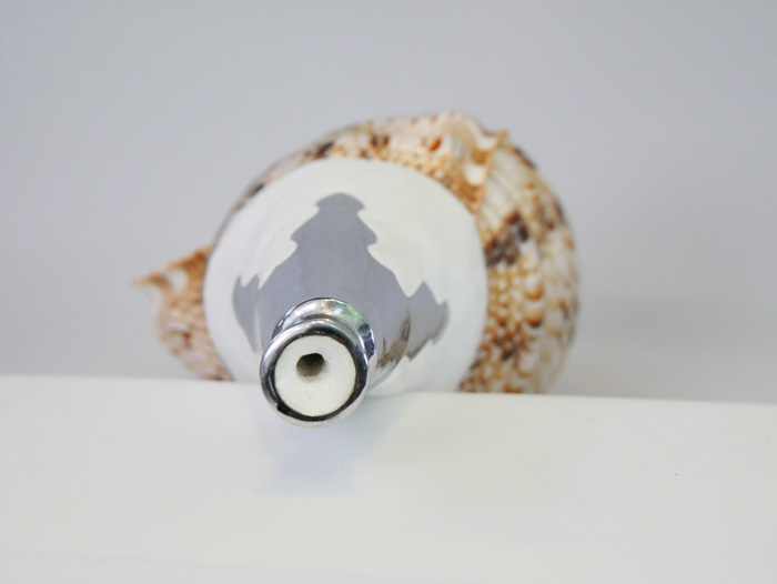 真言宗类型海螺壳,与喉舌大小 35-37 厘米