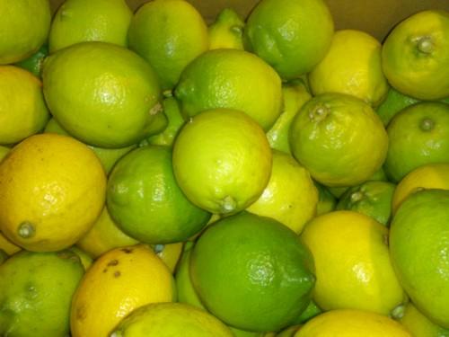 Organic Lemon, shichiro Grandpa 5 kg * size mixture
