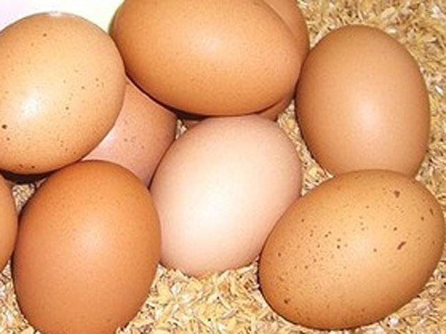 大放出セール 太陽食品の平飼い有精卵 休み たいようの幸せたまご 10個※運動たっぷりの平飼い鶏から生まれた元気な卵です 6~9月は冷蔵配送 ※常温配送