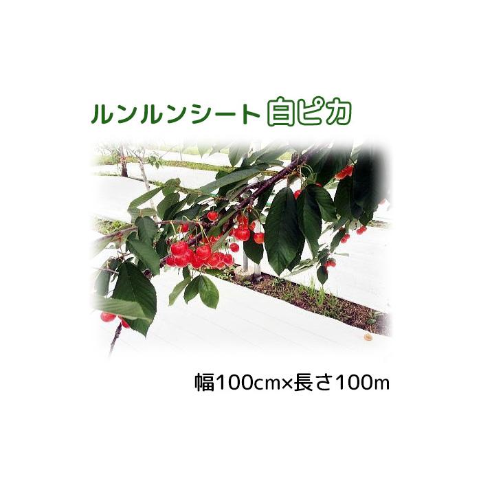 ルンルンシート 白ピカ 幅 100cm×100m 光合成促進 遮熱性防草シート 小泉製麻 法人個人選択
