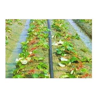 灌水ホース スミサンスイM-03 200m×1巻 住化農業資材