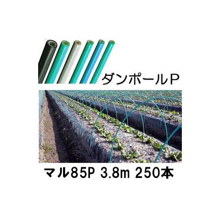 ダンポールP マル85 ×3.8m 緑 トンネル幅180cm 徳用 250本[トンネル支柱 アーチ支柱] 宇部エクシモ