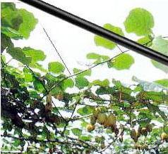 タキロン シーアイ カラー鉄線 果樹専用張線 半鋼線 EN線 カラーワイヤー EN22 外径2.2mm 芯径1.6mm 長さ2000m mitu