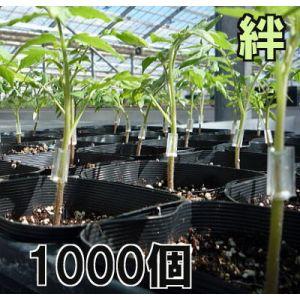 トマト 値下げ ナス ピーマンなどの接ぎ木に 接木ホルダー 絆 送料無料カード決済可能 きずな 1000個入 21号 18号 ナスニックス※15号 24号からお選びください