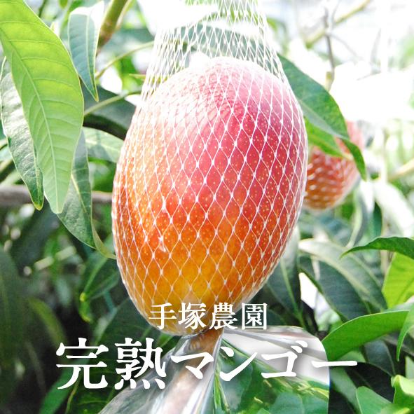 【送料無料】宇都宮産 完熟マンゴー(2kg箱)