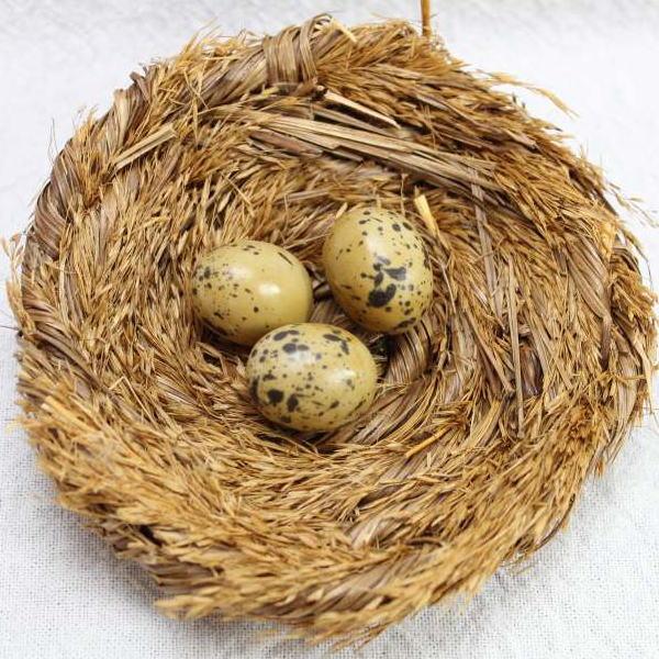 鳥ジオラマ小物鳥の巣 特価 奉呈 卵付き