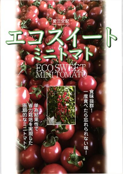 ミニトマト 種 『エコスイート』 1000粒 愛三種苗